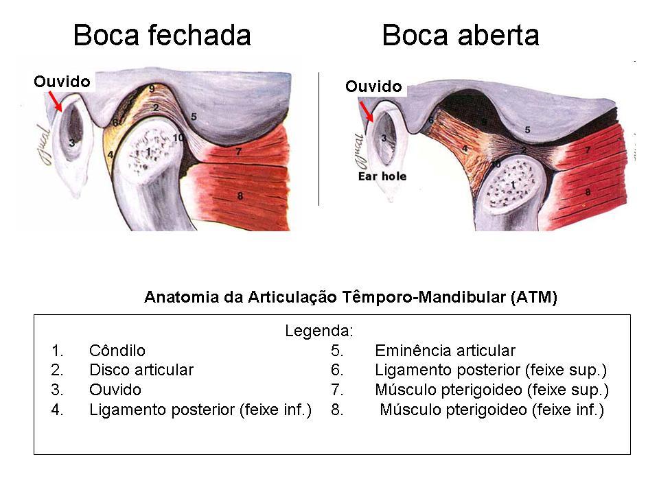 Componentes internos da ATM - Portal Patologia da ATM
