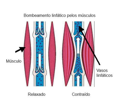 muscle pump effect